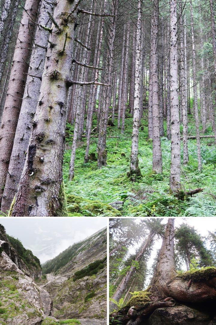 Trees & Mountains