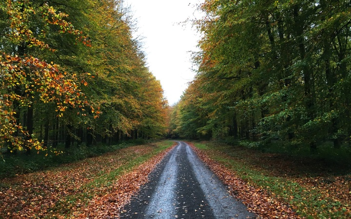 autumn walk leaves