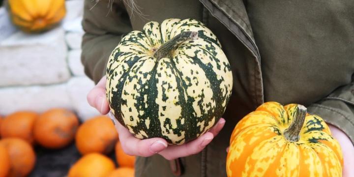 My Pumpkin Adventure