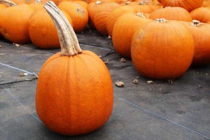 slindon pumpkins