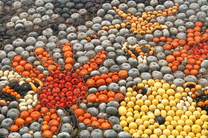 slindon pumpkins display 2016