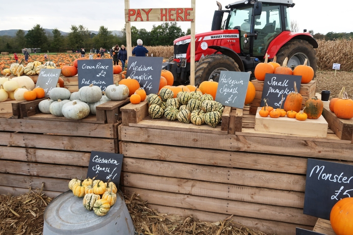 Time Flies Pumpkins Autumn November